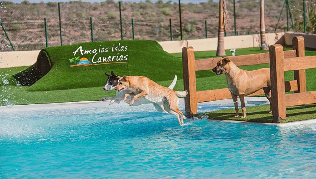 Hotel para perros en tenerife islas canarias aceptan for Piscinas publicas en el sur de tenerife