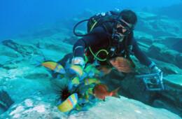 foto buceando en Tenerife islas Canarias pescados