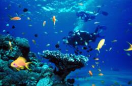 fotos de Buceo en Tenerife fotos marinas