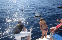 Fotografias de delfines y Marinas en Tenerife