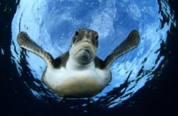 fotos de las tortugas en Tenerife buceo