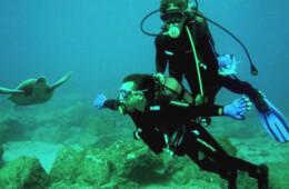 buceando con tortugas en Tenerife mar