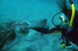 buceo con las tortugas en el mar de Tenerife