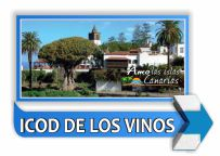 municipio de icod de los vinos tenerife islas canarias arbol longevo