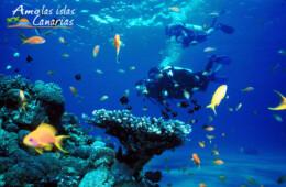 buceo en tenerife mar de canarias imagenes fotos fondos marinos en fuerteventura lanzarote atlantico españa