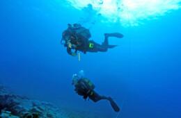 Fotos marinas y de buceo en Tenerife