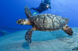 fotografias marinas y de buceo en Tenerife islas Canarias