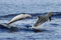 Fotos de delfines en Tenerife de buceo y marinas