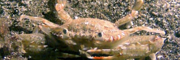 fauna marina crustaceos islas canarias oceano atlantico imagenes de los fondos marinos tenerife gran canaria españa