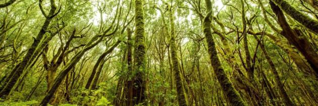 fotos de los mejores parques nacionales españoles islas canarias la gomera garajonai bosques laurisilva turismo