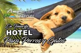 Hotel para perros en Tenerife Islas Canarias aceptan perros animales en Tenerife sur MASCOTS