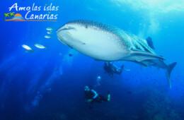 imagenes acuaticas cetaceos mundo marino en canarias buceo tenerife gran canaria lanzarote el hierro