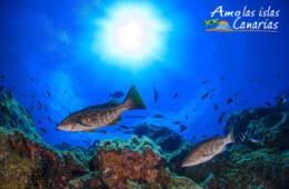 imagenes del fondo marino fotos acuaticas del oceano atlantico islas canarias