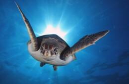 fotografias de tortugas en Tenerife marinas