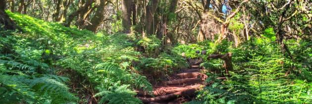 senderismo en la gomera lugares naturales turismo bosques parques paseos entre vegetacion imagenes islas canarias fotos