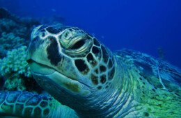 tortuga marina en Tenerife buceo y marinas