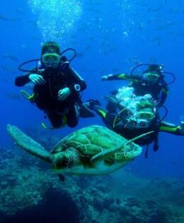 buceo con tortugas marinas en Tenerife islas Canarias