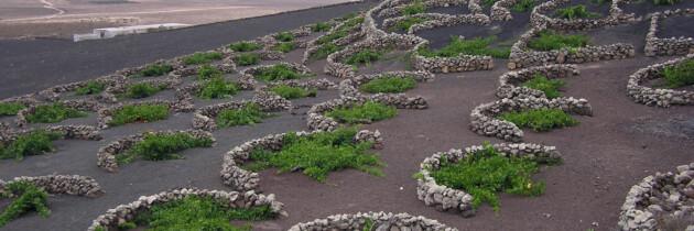 viñedos de la gomera islas canarias españa fotografias amo las islas canarias